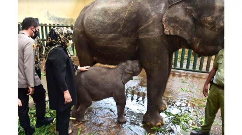 Masyarakat Sudah Boleh Berlibur ke Taman Safari Indonesia di Puncak, tapi Pahami Persyaratannya ya